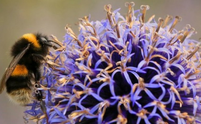 Help us protect bees and butterflies image