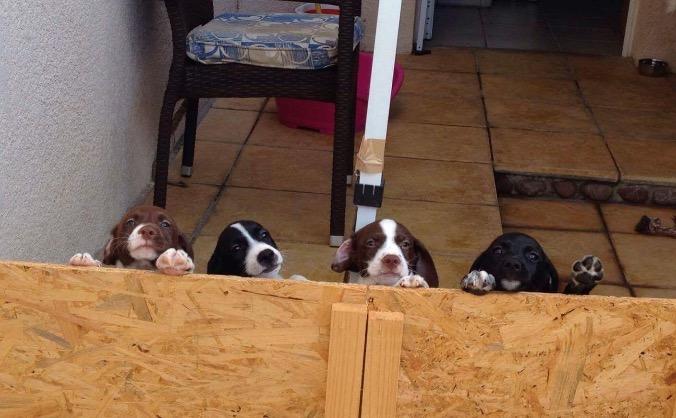 Pound dog rescue cyprus!!!!! image