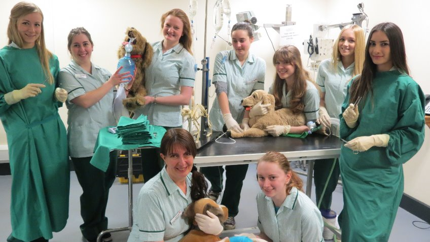 Send a Veterinary Nurse to India