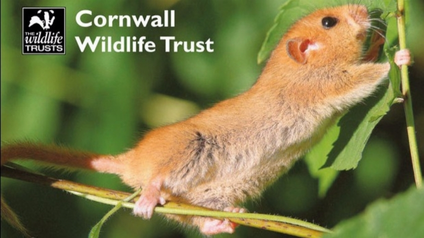 Cornwall Wildlife Trust - Power for Wildlife