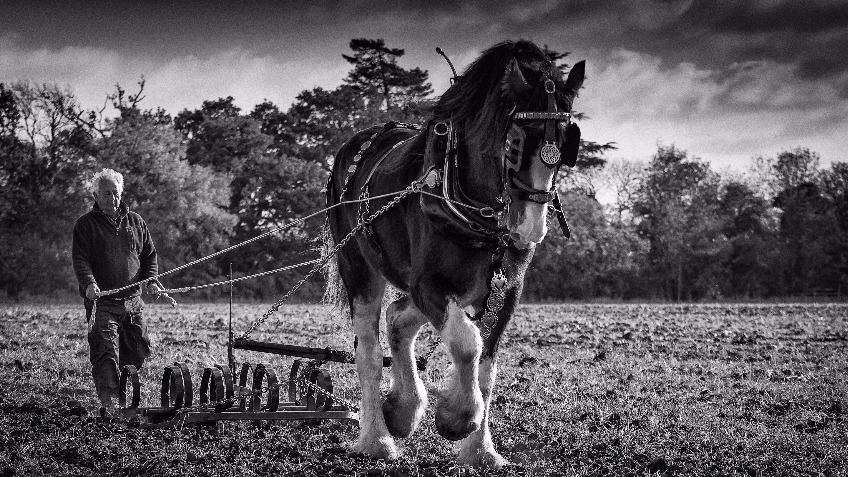 Save the UK's Heavy Horses