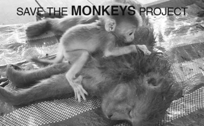 Save the monkeys! image