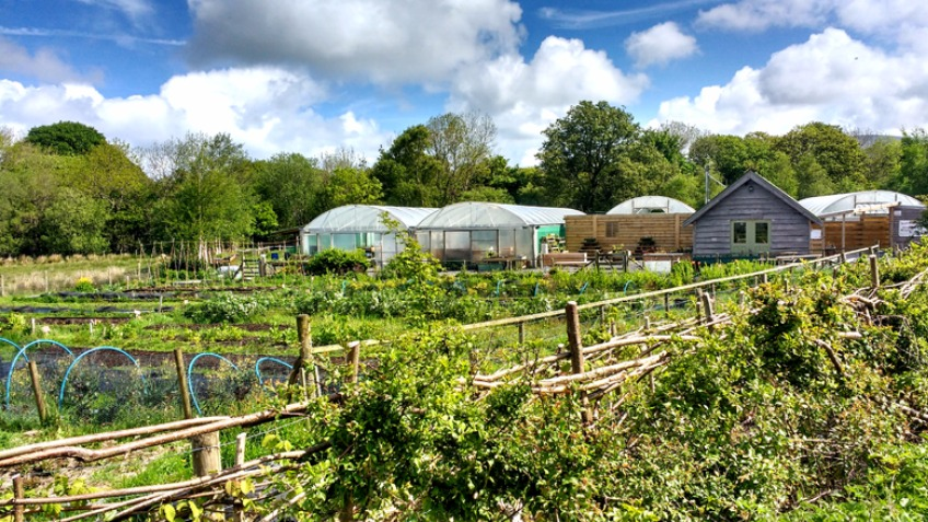 Blas Lôn Las - A Community Farm Shop and Cafe