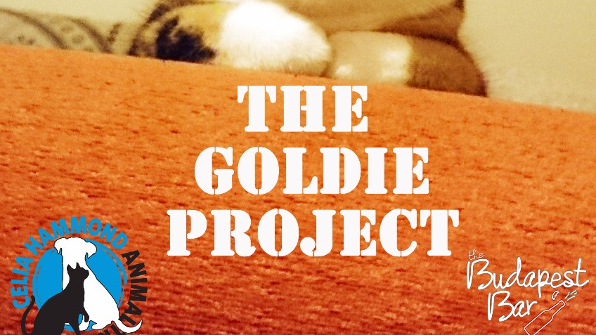 The Goldie Project - Charity Crowdfunding for Cats