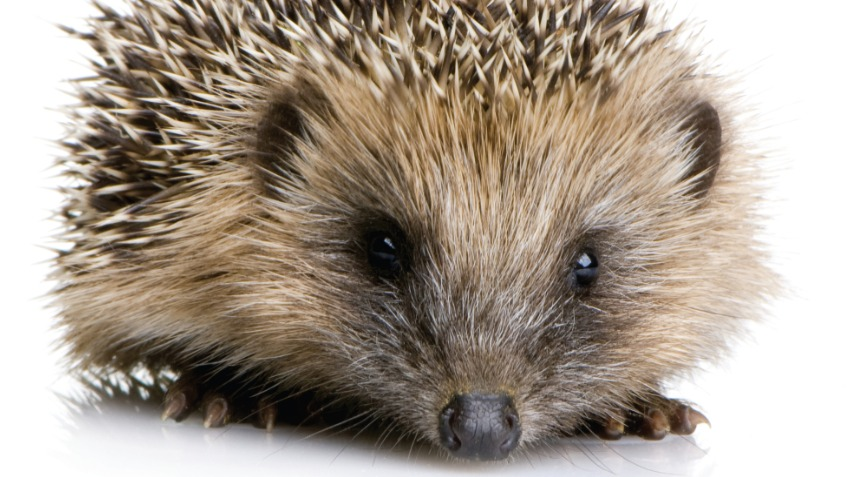 Supporting the hedgehogs in our care