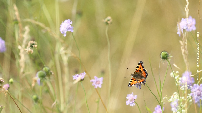 Are pesticides killing our butterflies?