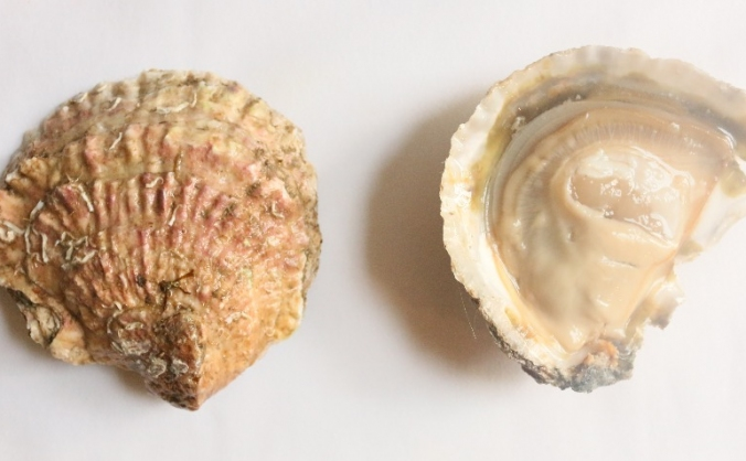 London oyster week image
