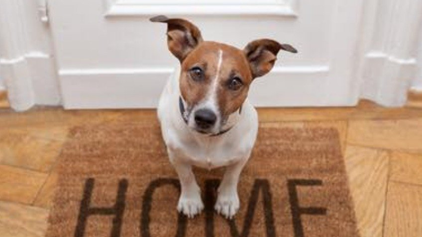 Vets bills Emergency home to home rehoming
