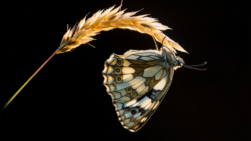 Native Species Butterfly And Moth Breeding House An