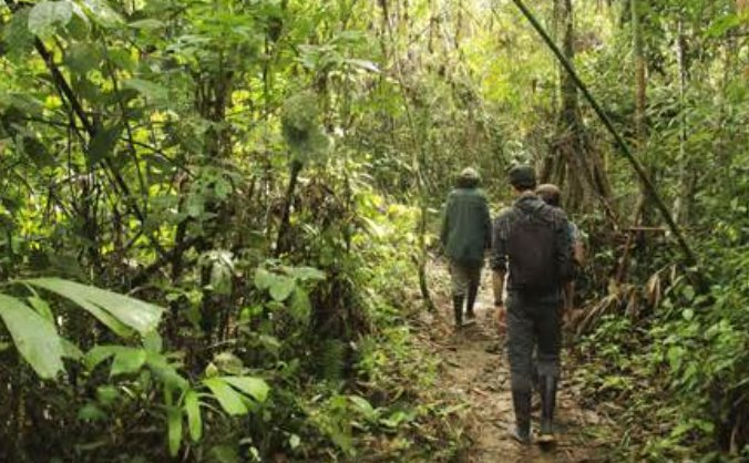Rainforest Conservation Aiding Endangered Species