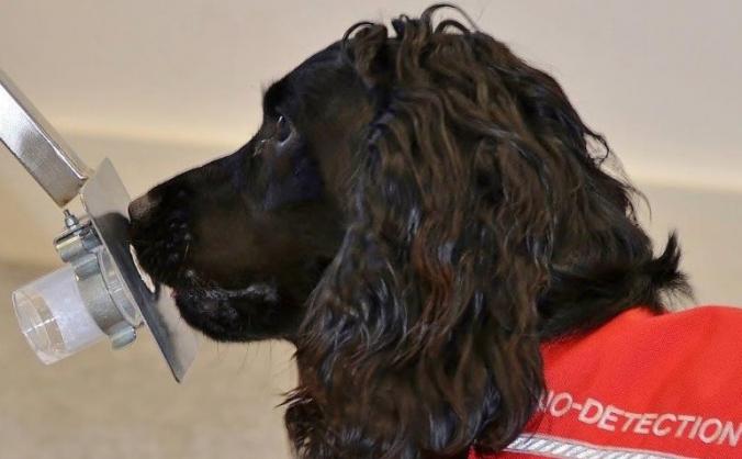 Fund a cancer detection dog image