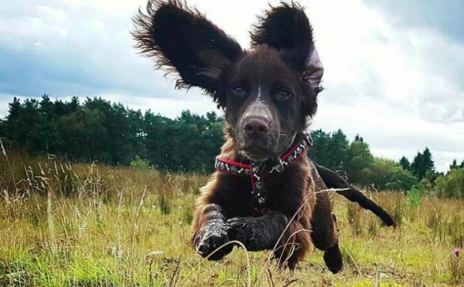 Bravehound image