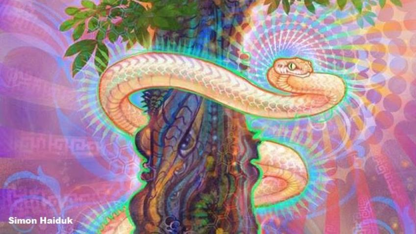 'The Snake in the Wall' - A film about Ayahuasca