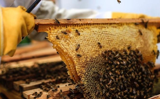 Worthing honey collective image