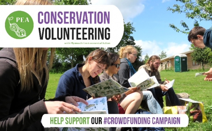 Plymouth conservation volunteering 2016 image