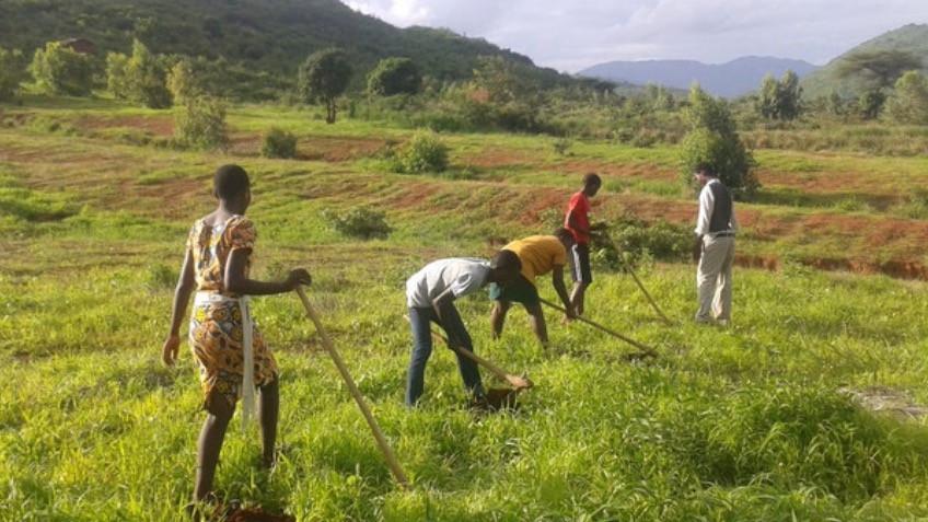 Reforestation initiative in Malawi
