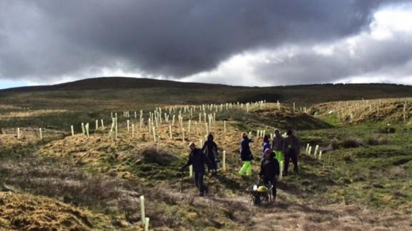 North Pennines Tree Planting Project