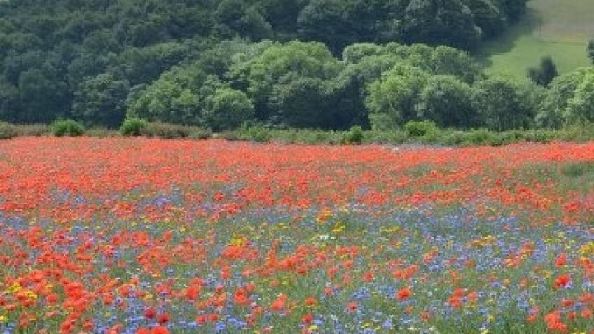 Market Garden - Saving Wild Flower Meadows