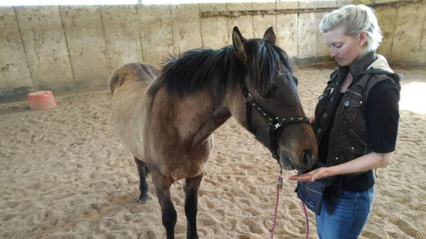 CREATING AN ENRICHED ENVIRONMENT FOR RESCUE HORSES