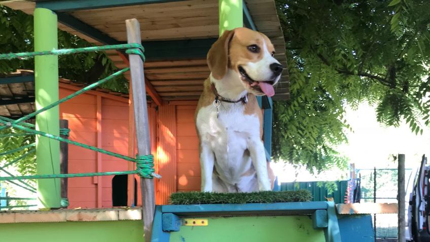 Dog Stories Day Care & Doggy Adventure Playground