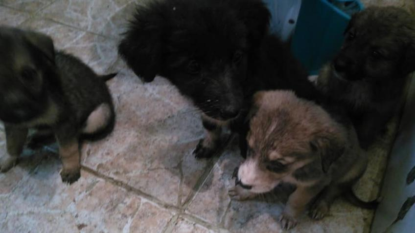 Help give these puppies a chance in life
