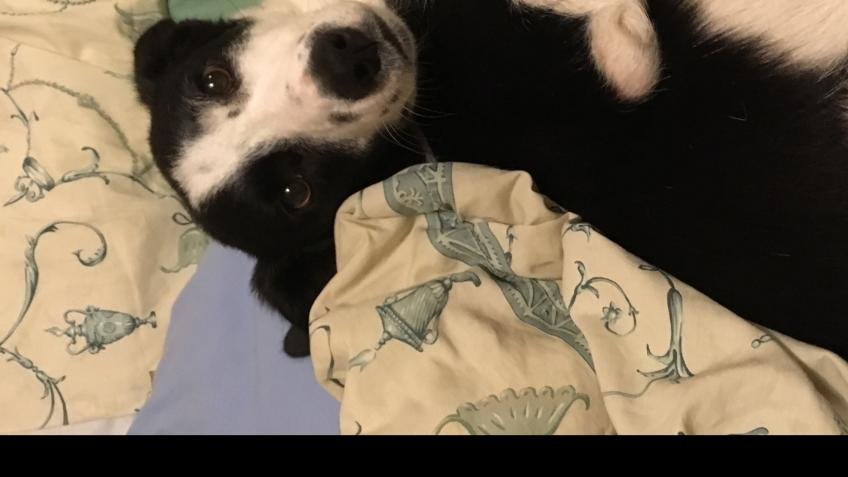 Help My Rescue Dog