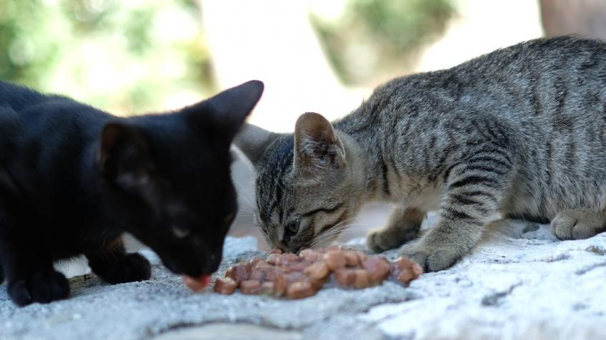 Croatian Kittens Rescue