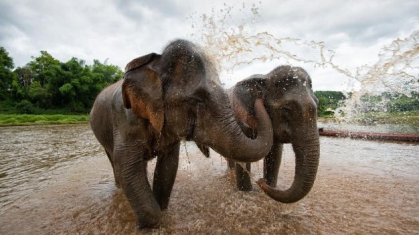 Laos Elephant Conservation Fundraiser