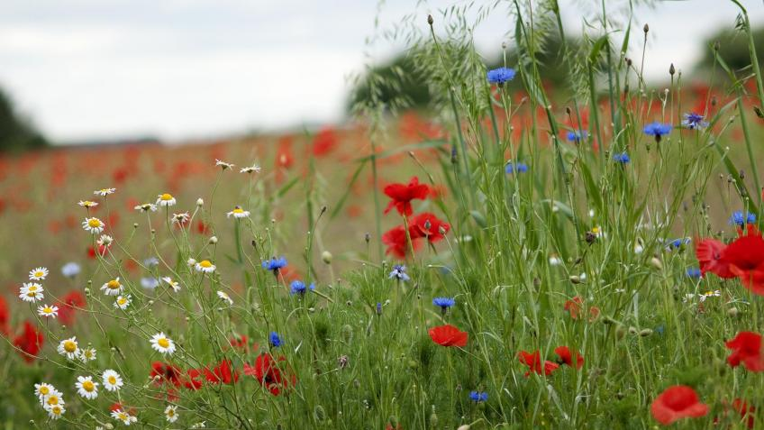 Save Nottinghamshire's Wildflower Meadows