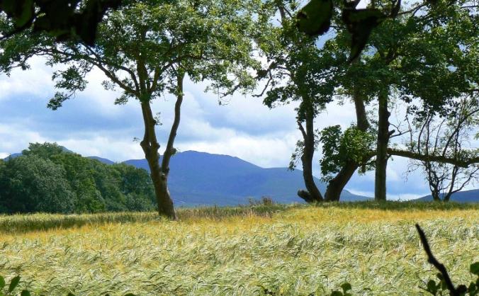 Natur cymru - nature of wales image