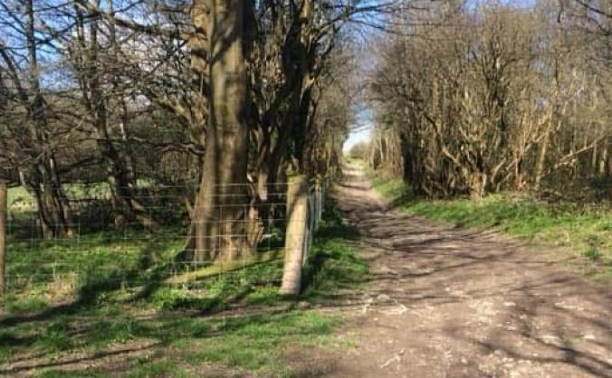 Bevendean & moulsecoomb nature trail image