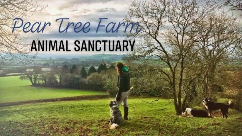 Pear Tree Farm Animal Sanctuary