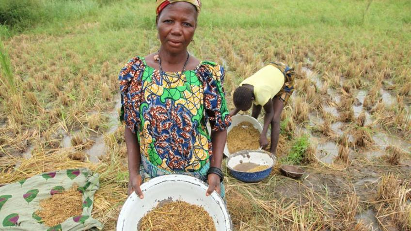 Taimaka: helping farmers in Gombe escape poverty