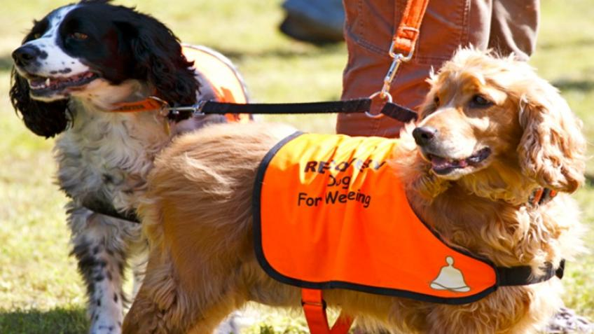 RECOVERY Assistance Dogs for Mental Health