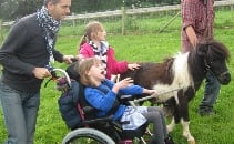 Shetland Ponies for Bath City Farm