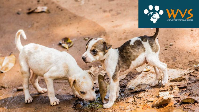 Help Animals Globally During the Pandemic
