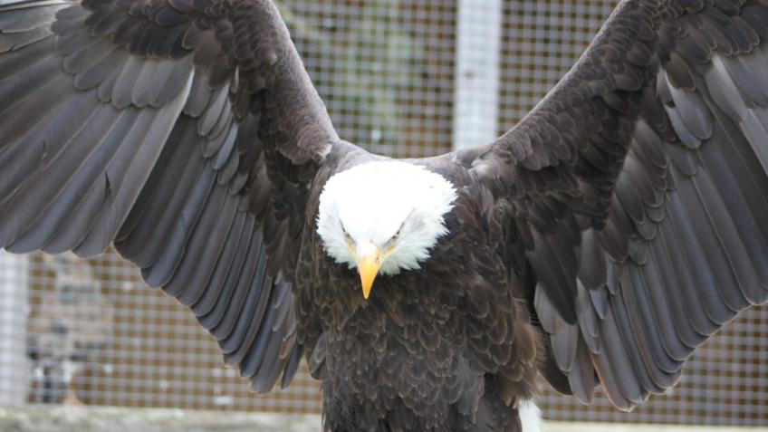 The Raptor Foundation