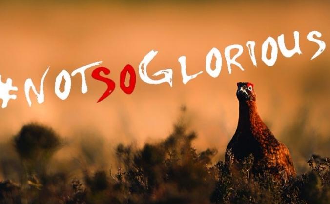 Ban driven grouse shooting image