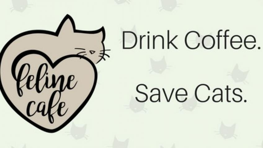 Help Feline Cafe Survive COVID-19