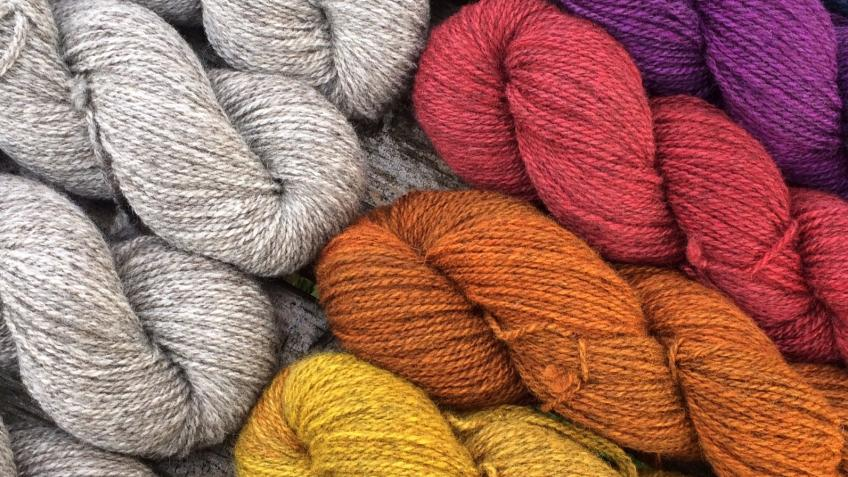 Help us spin our Single Flock Welsh Wool yarn!