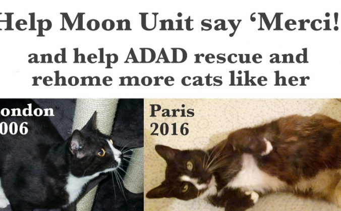 Help moon unit say merci! image