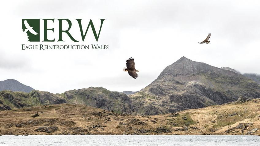 Eagle Reintroduction Wales (ERW) Project