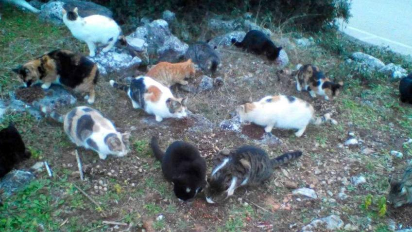 Cres Cats Coronavirus Food Support