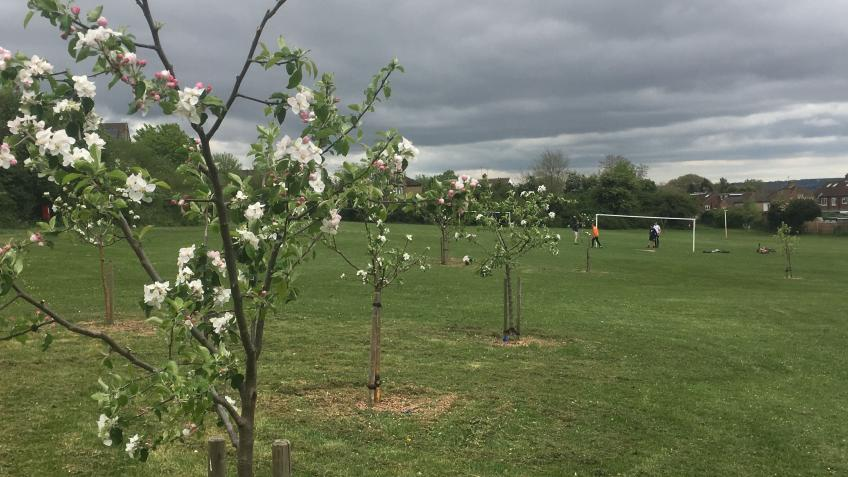 Lets plant trees in Marlow this winter
