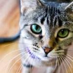 kittykat22