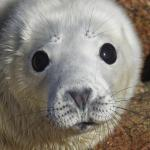 Cornwall Seal Research Trust profile