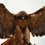 Hawkforcebop