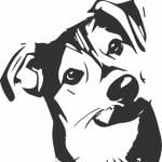 Fetcher Dog Foundation