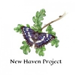 Tracey Alison - New Haven Project